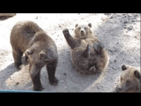 Try Not To Laugh Funny Animal Videos - Funny And Cute Animal Videos