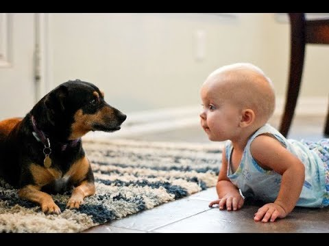 Funny Dog And Baby - Funny Video Of Dog And Baby | Babies And Dogs